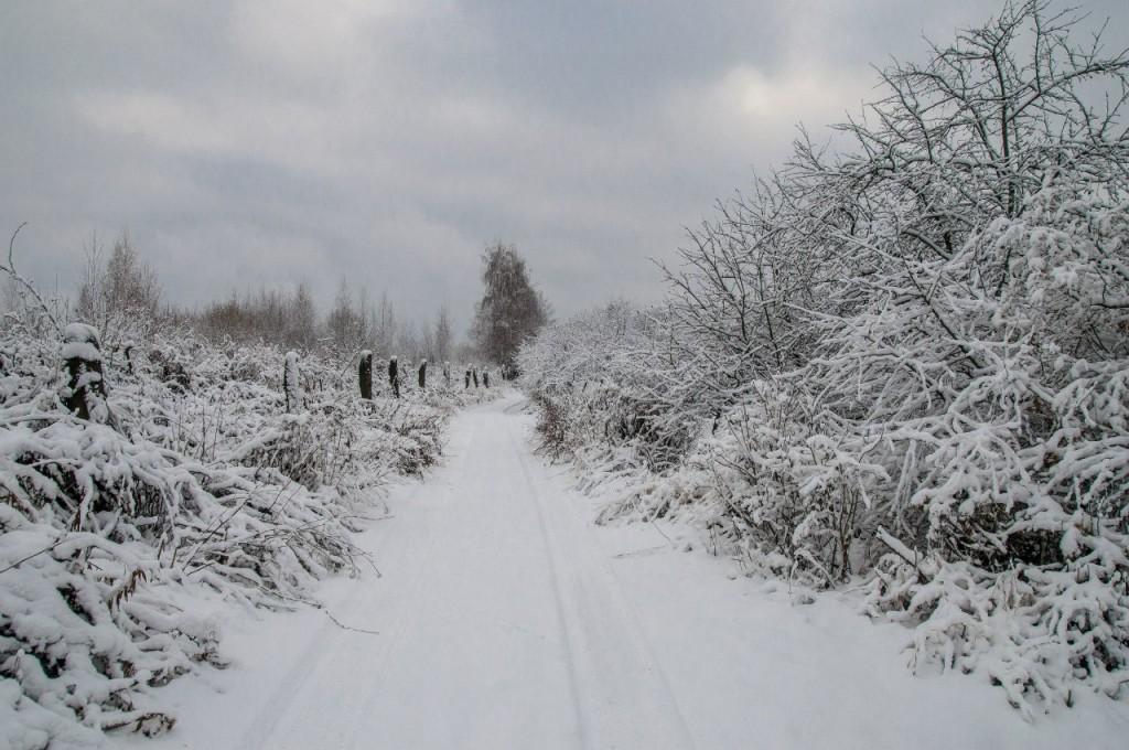 Поход во Владимирский лес 12