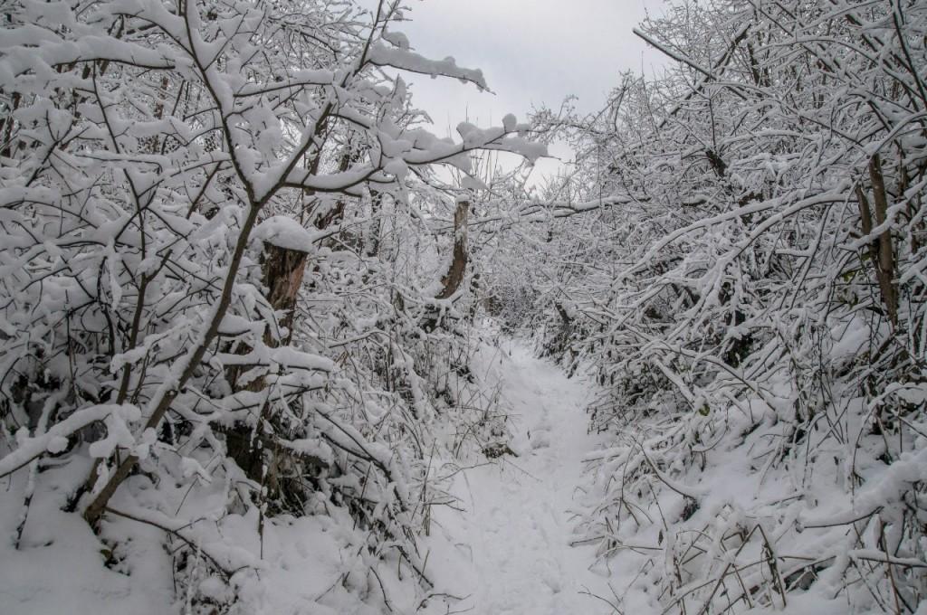 Поход во Владимирский лес 13