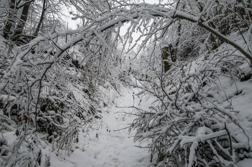 Поход во Владимирский лес 14