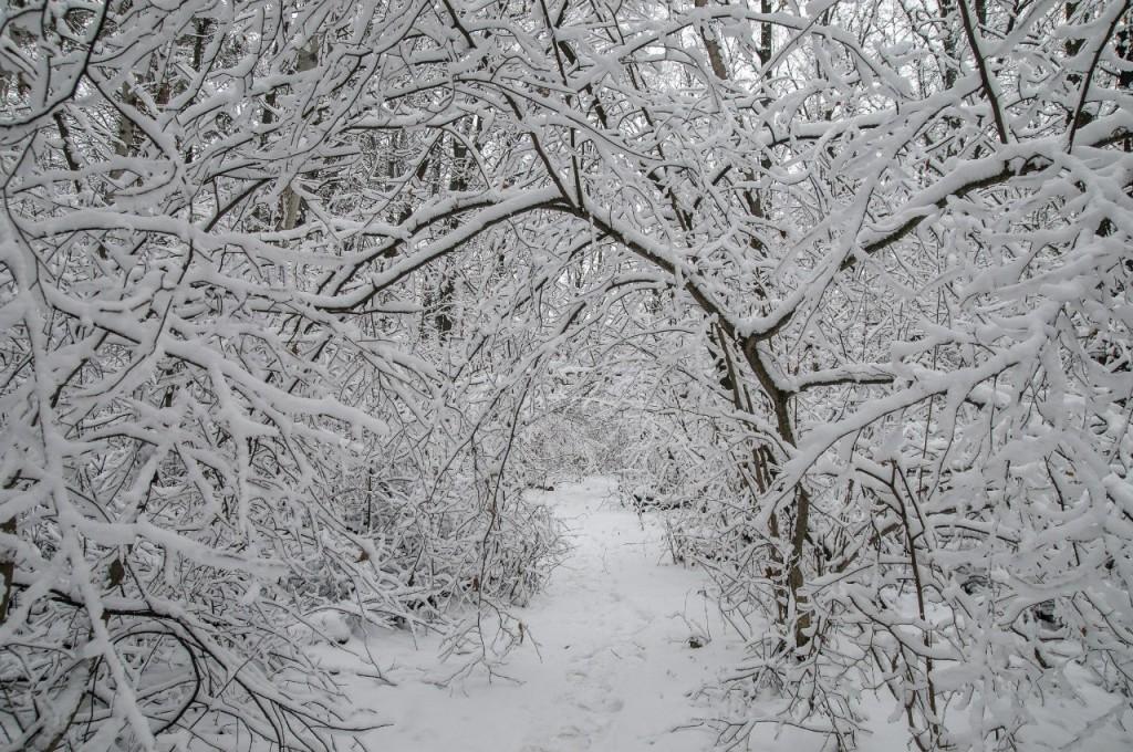 Поход во Владимирский лес 15