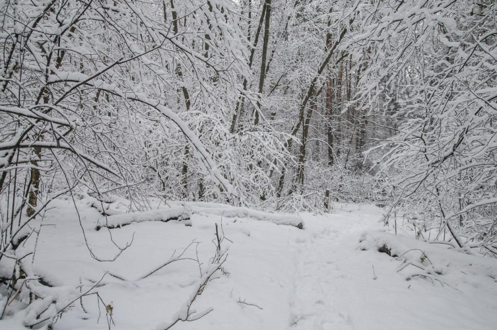 Поход во Владимирский лес 16