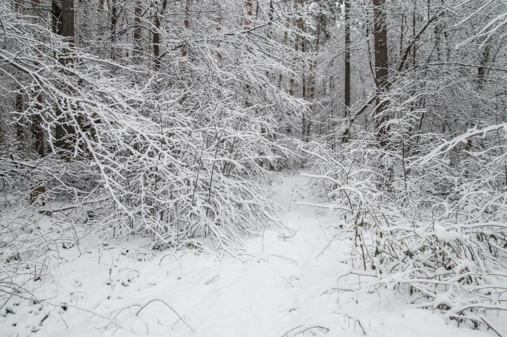 Поход во Владимирский лес 17