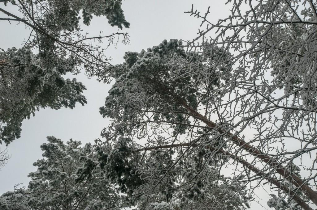 Поход во Владимирский лес 19
