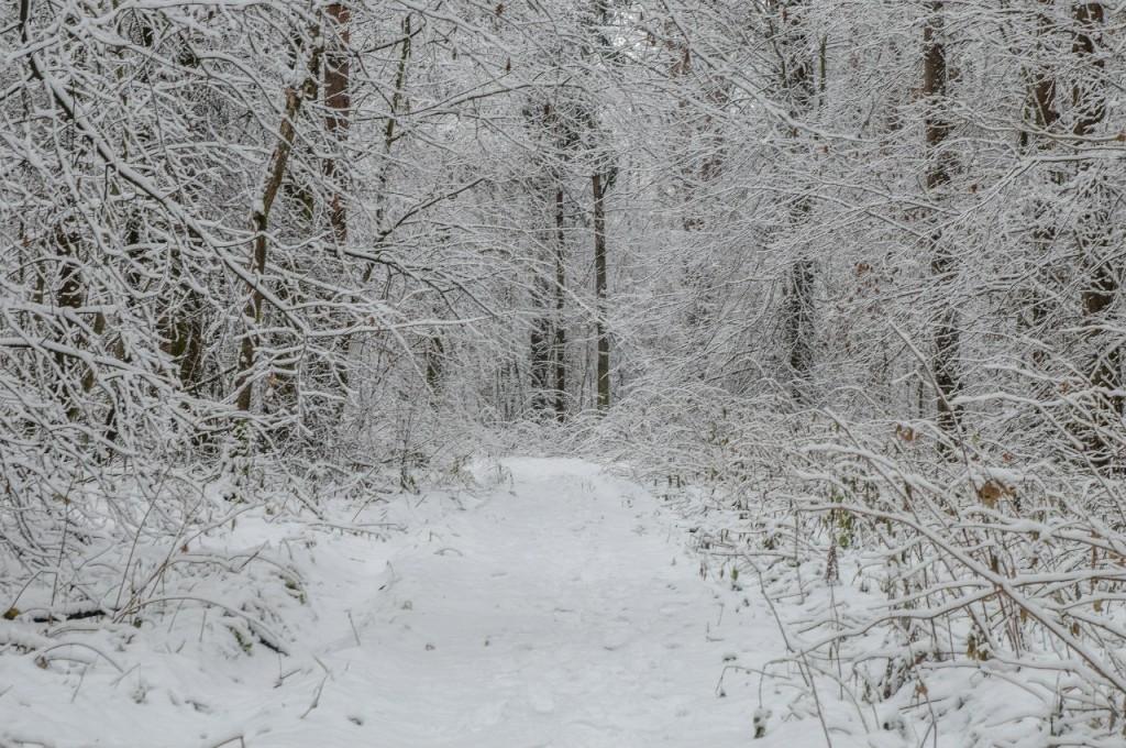 Поход во Владимирский лес 20