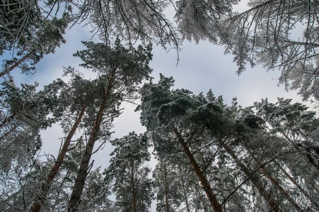 Поход во Владимирский лес 21