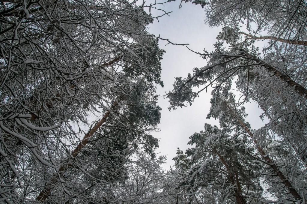 Поход во Владимирский лес 22