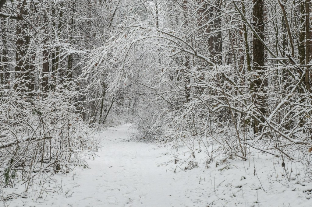 Поход во Владимирский лес 23