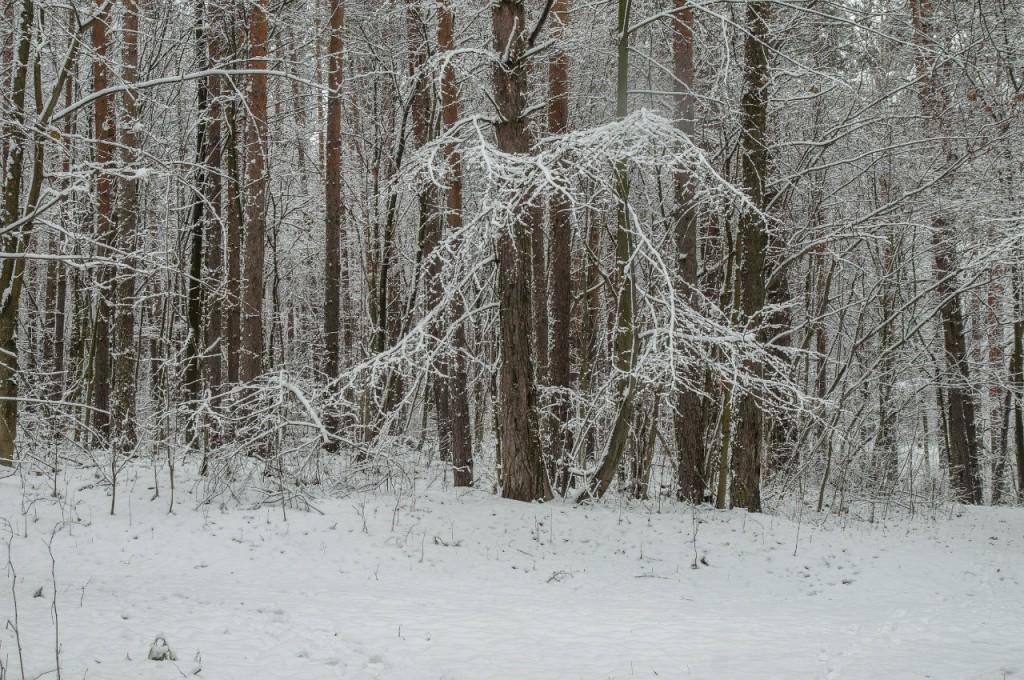 Поход во Владимирский лес 24