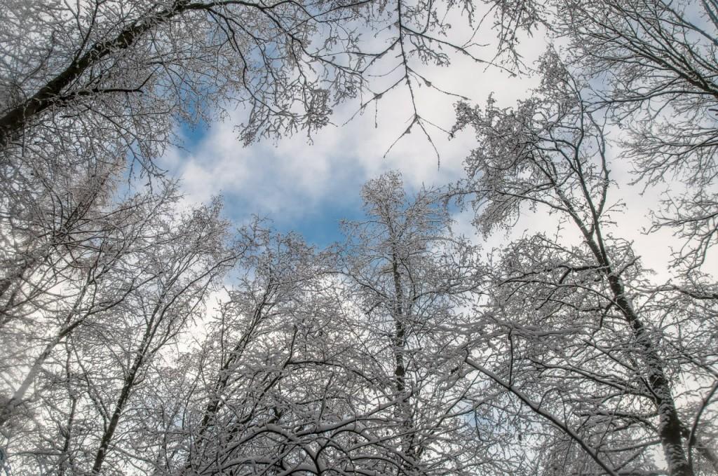 Поход во Владимирский лес 25