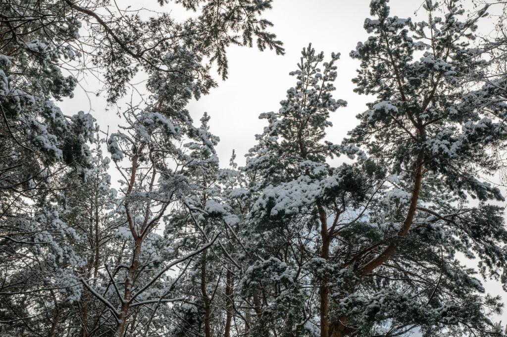 Поход во Владимирский лес 28