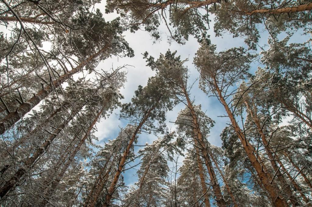 Поход во Владимирский лес 29