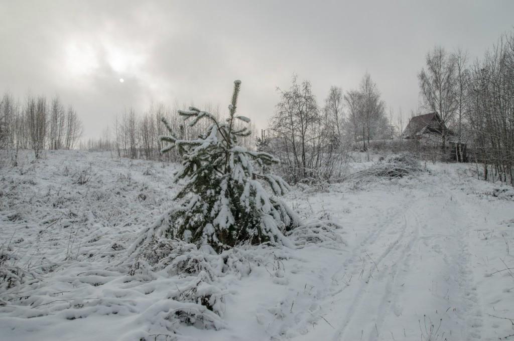 Поход во Владимирский лес 35