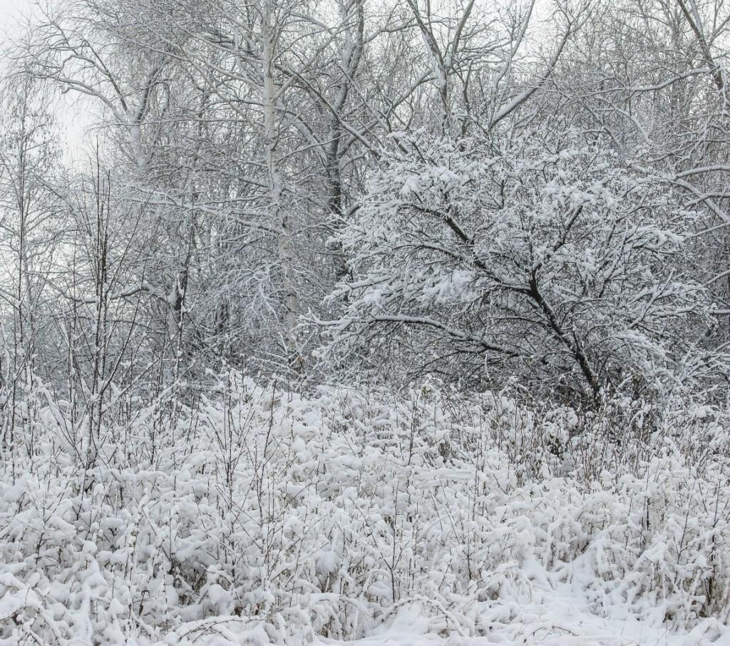 Поход во Владимирский лес 41
