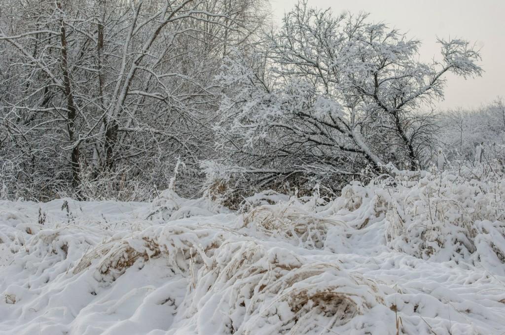 Поход во Владимирский лес 42