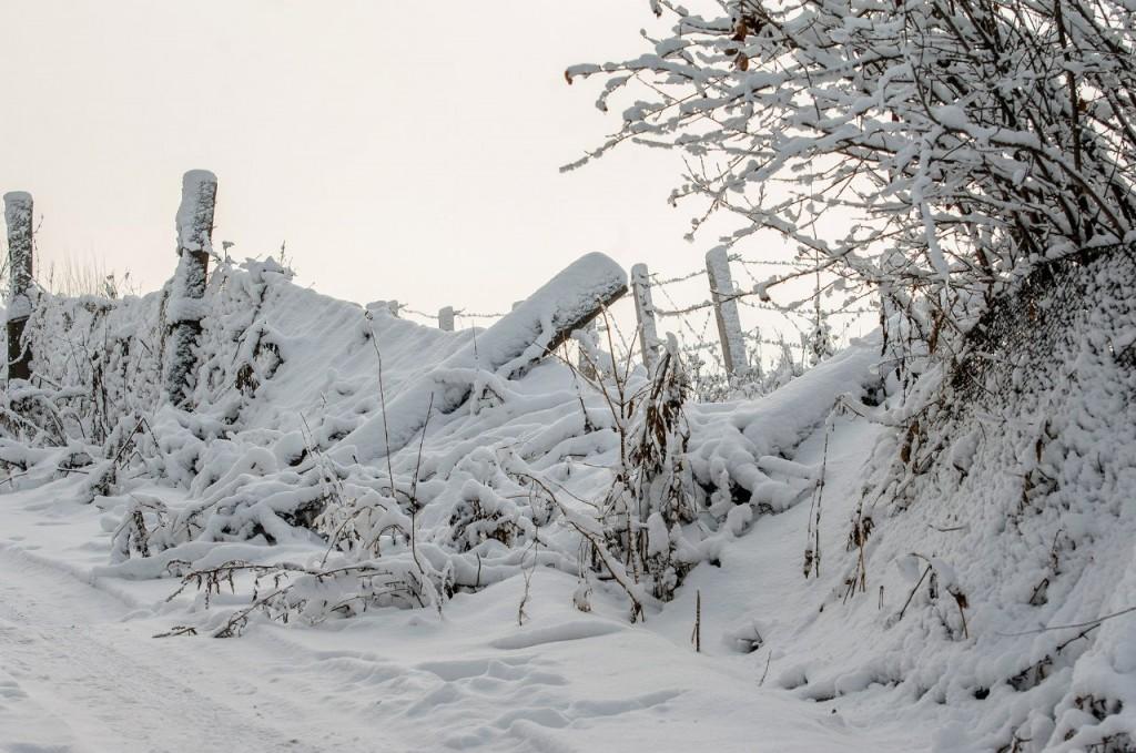 Поход во Владимирский лес 47