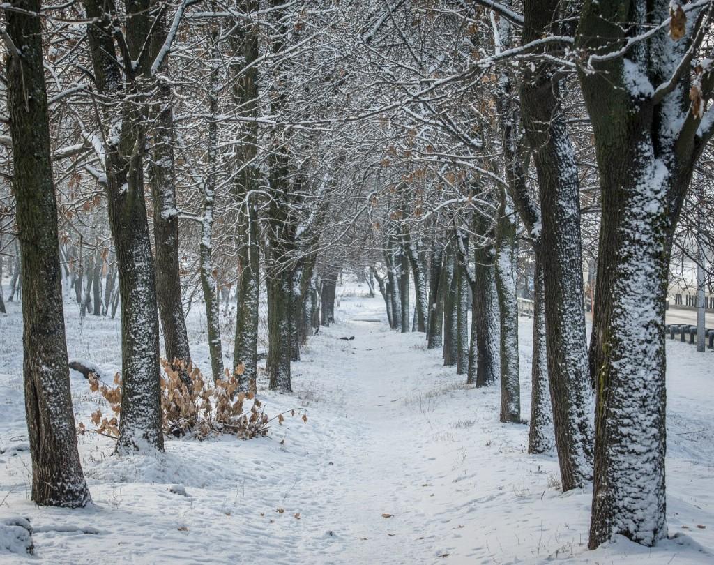 Поход во Владимирский лес 54