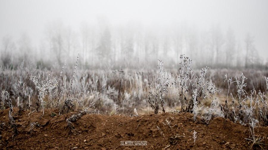 Прогулка по окрестностям Владимира в заснеженную пору 04