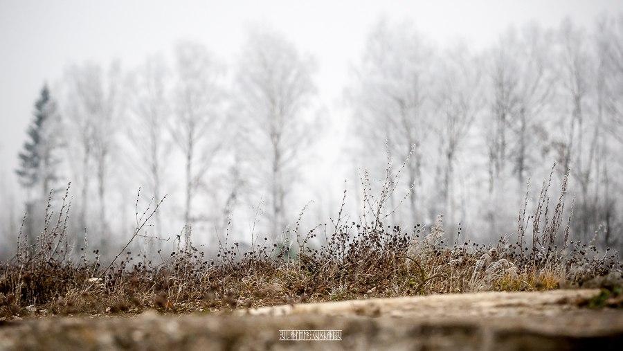 Прогулка по окрестностям Владимира в заснеженную пору 06
