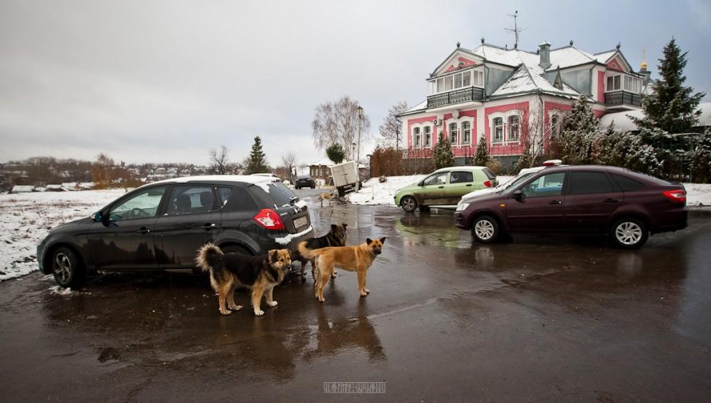 Суздальская жизнь от Владимира Чучадеева 08