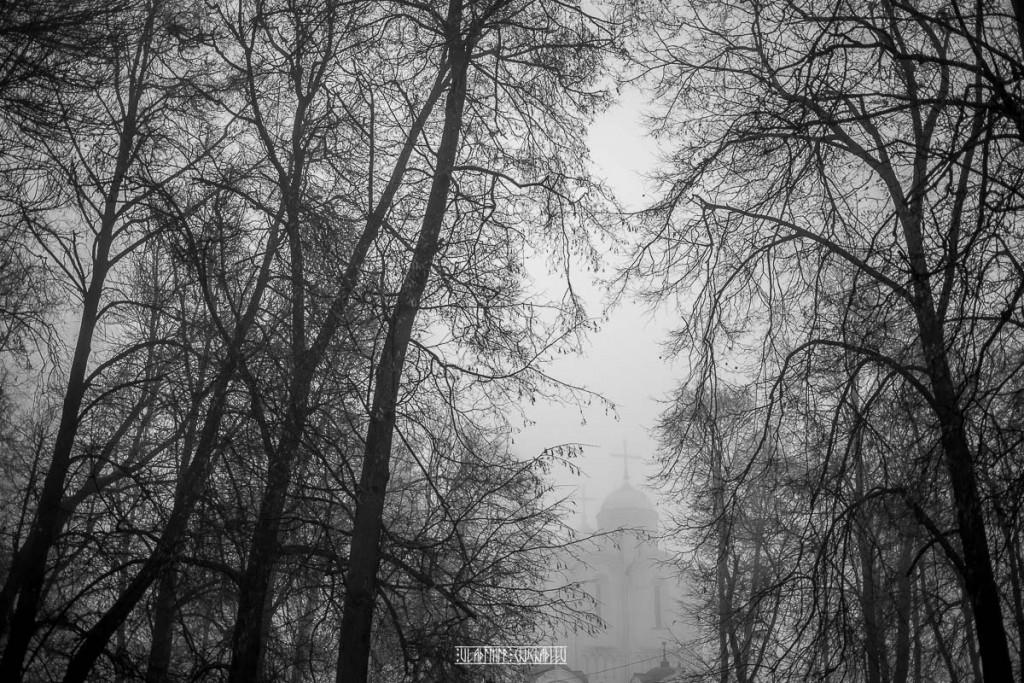 Туманный ноябрь 2015 от Владимира Чучадеева 08