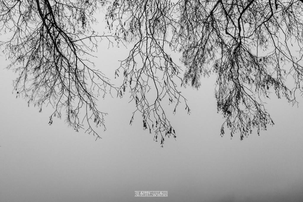 Туманный ноябрь 2015 от Владимира Чучадеева 09