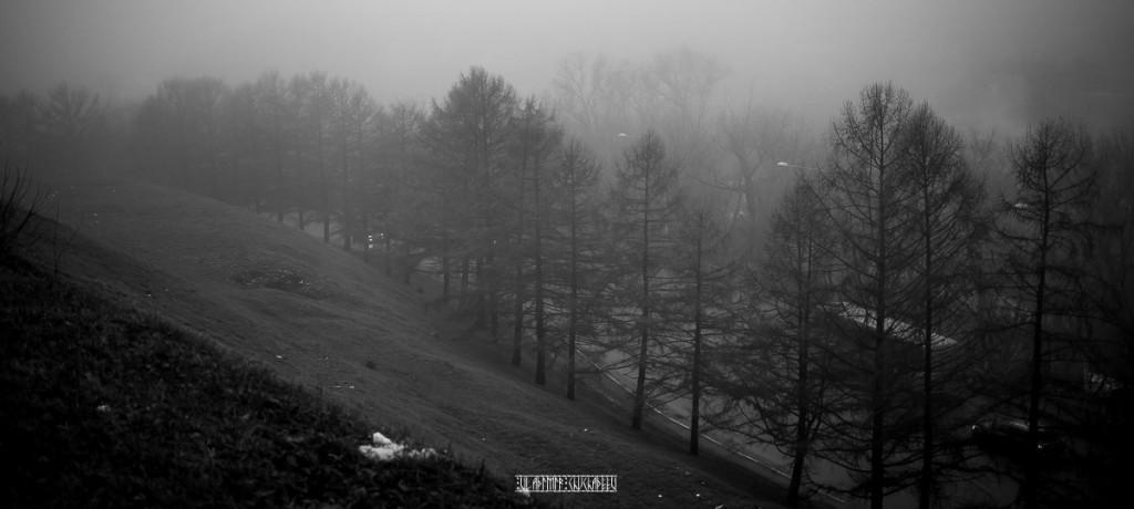 Туманный ноябрь 2015 от Владимира Чучадеева 13