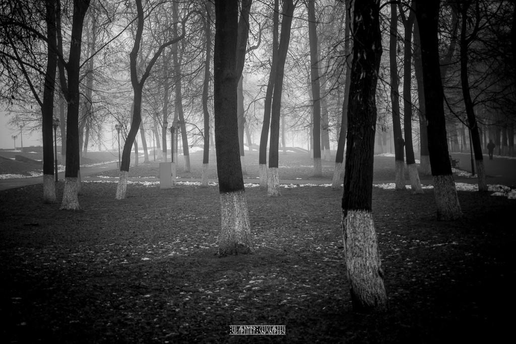 Туманный ноябрь 2015 от Владимира Чучадеева 14