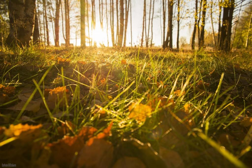 Туман и солнце во Владимирской области