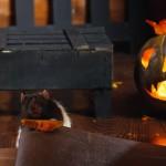 Хеллоуин 2015 в Муроме 20