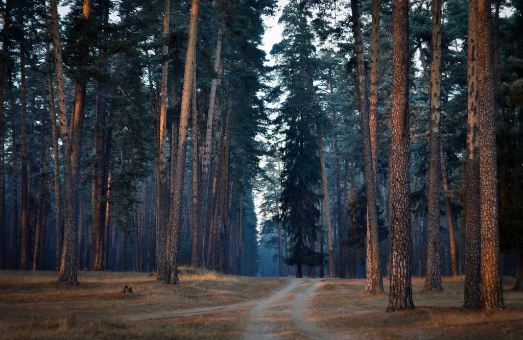 Гусь-Хрустальный район. Мистический лес