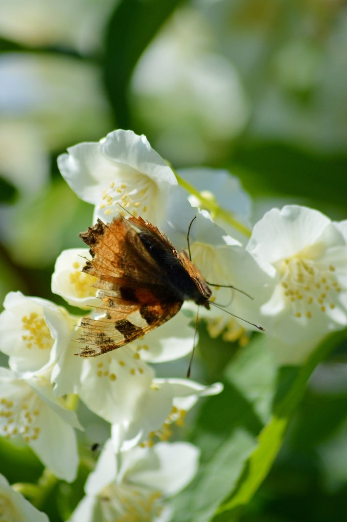 Дачные цветы Мурома 06