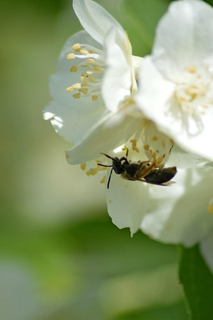 Дачные цветы Мурома 07