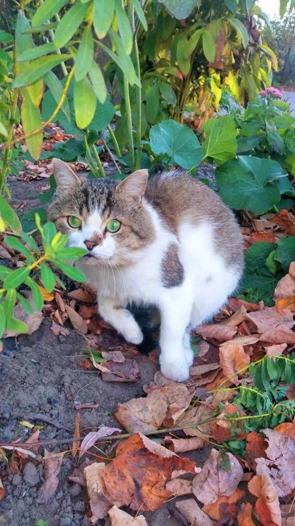 Коты Владимирской области 01