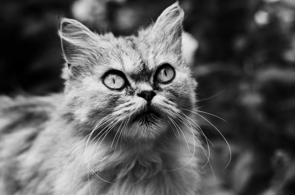 Коты Владимирской области 04