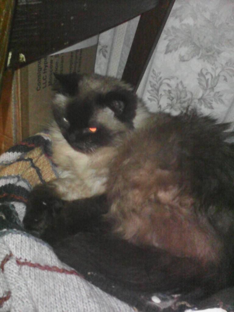 Коты Владимирской области 08