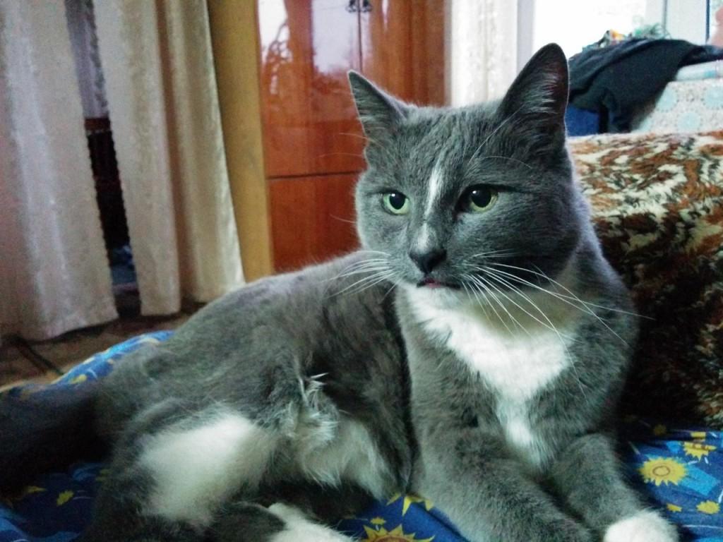 Коты Владимирской области 10