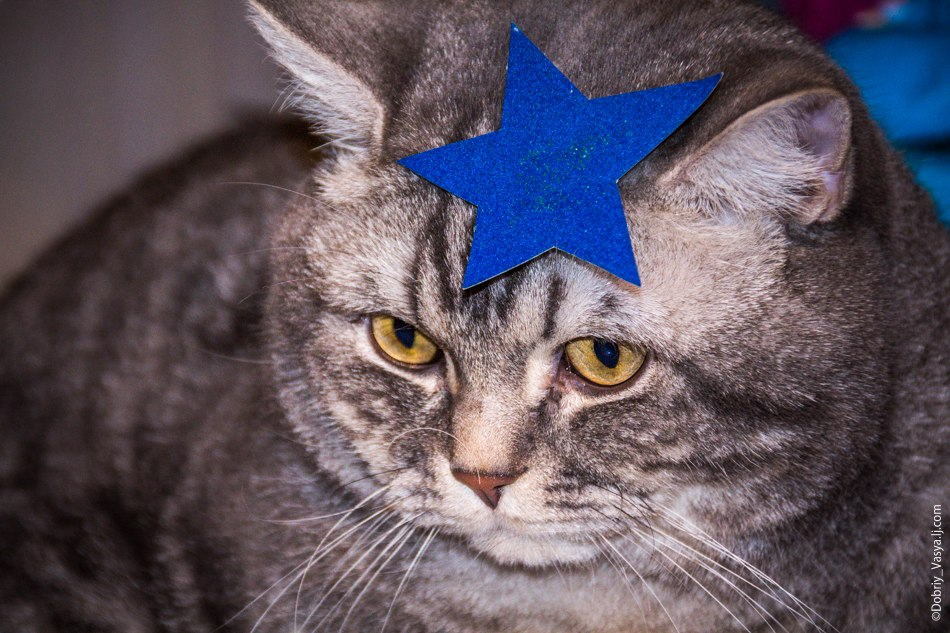 Коты Владимирской области 13