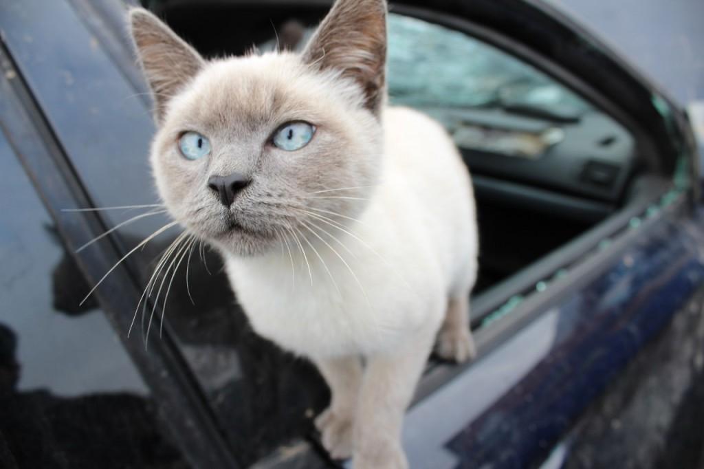 Коты Владимирской области 15