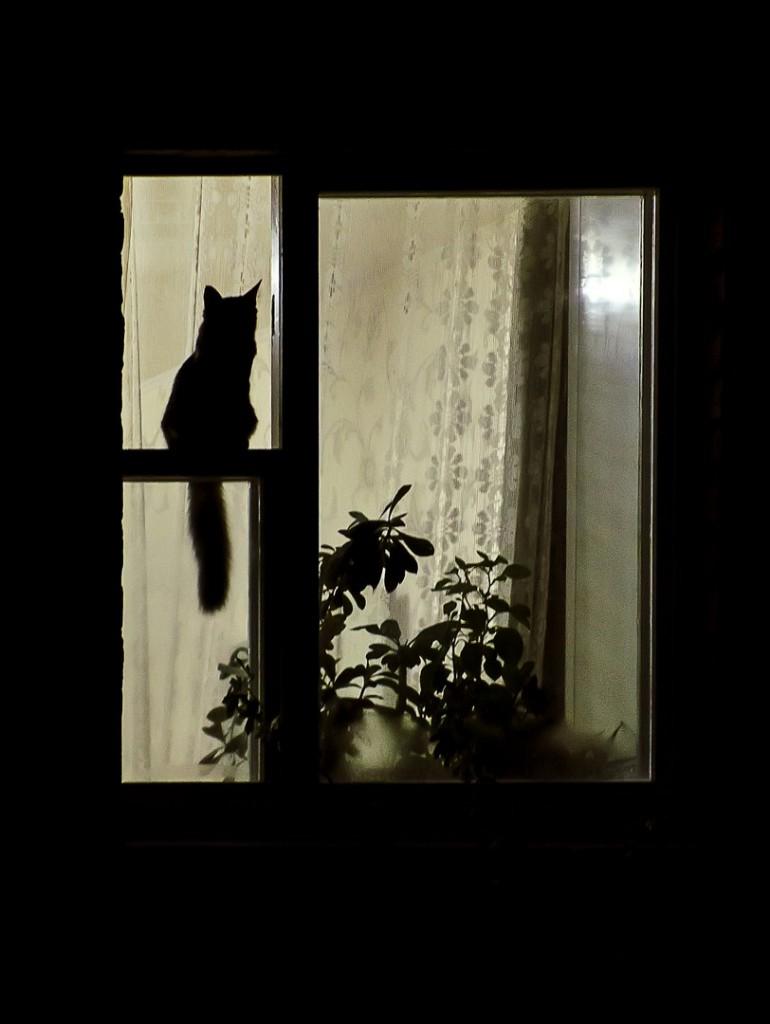 Коты Владимирской области 17