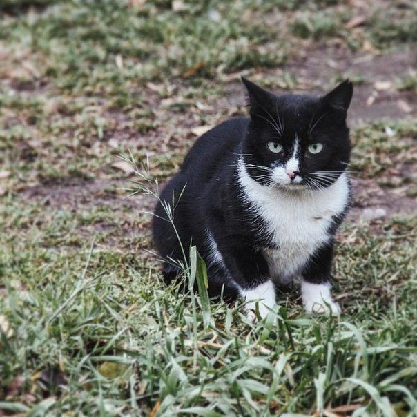 Коты Владимирской области 25