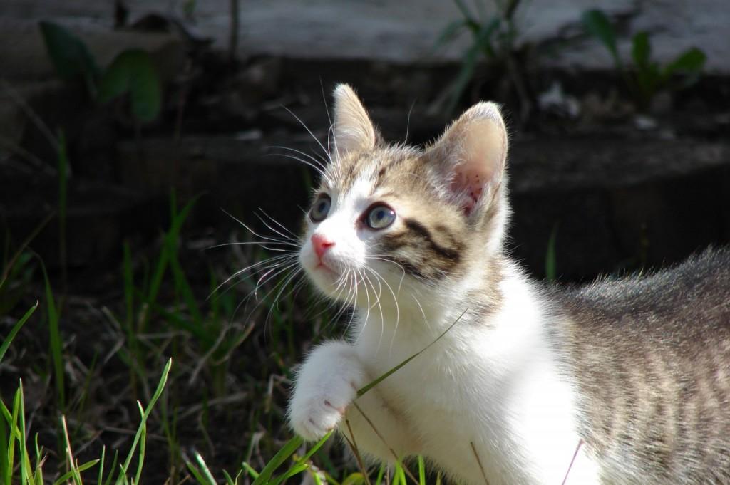 Коты Владимирской области 32