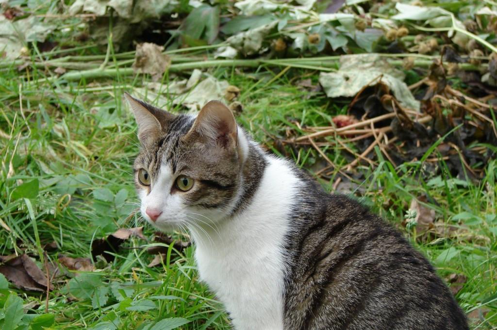 Коты Владимирской области 33