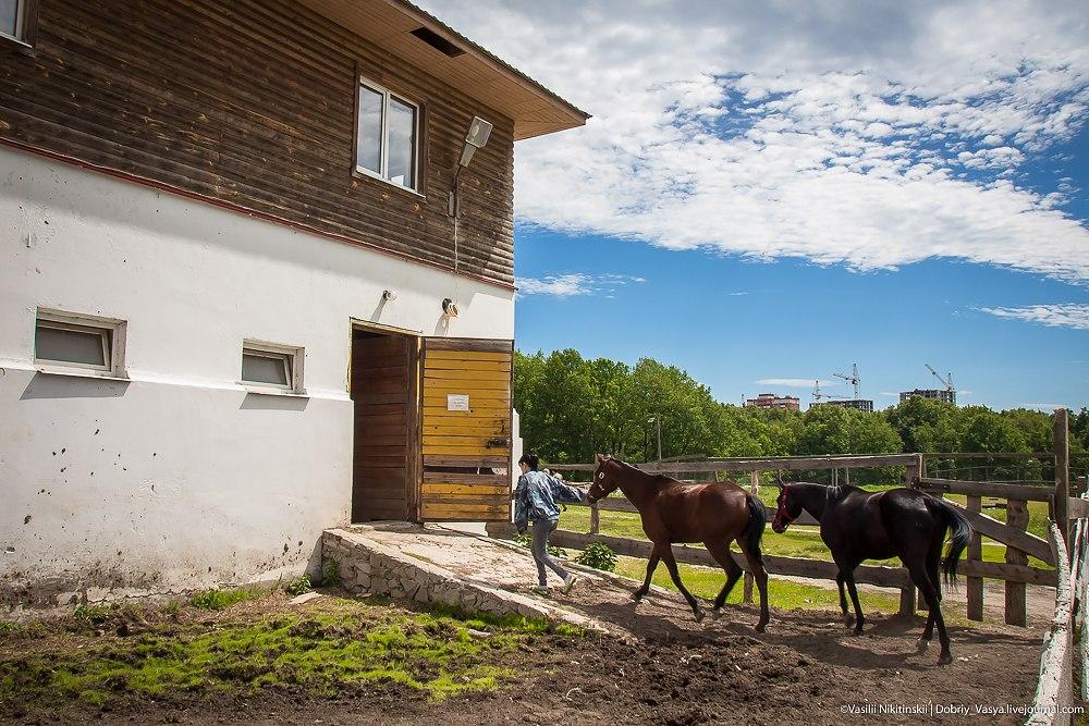 Лошади в Парке Дружба, Владимир 01