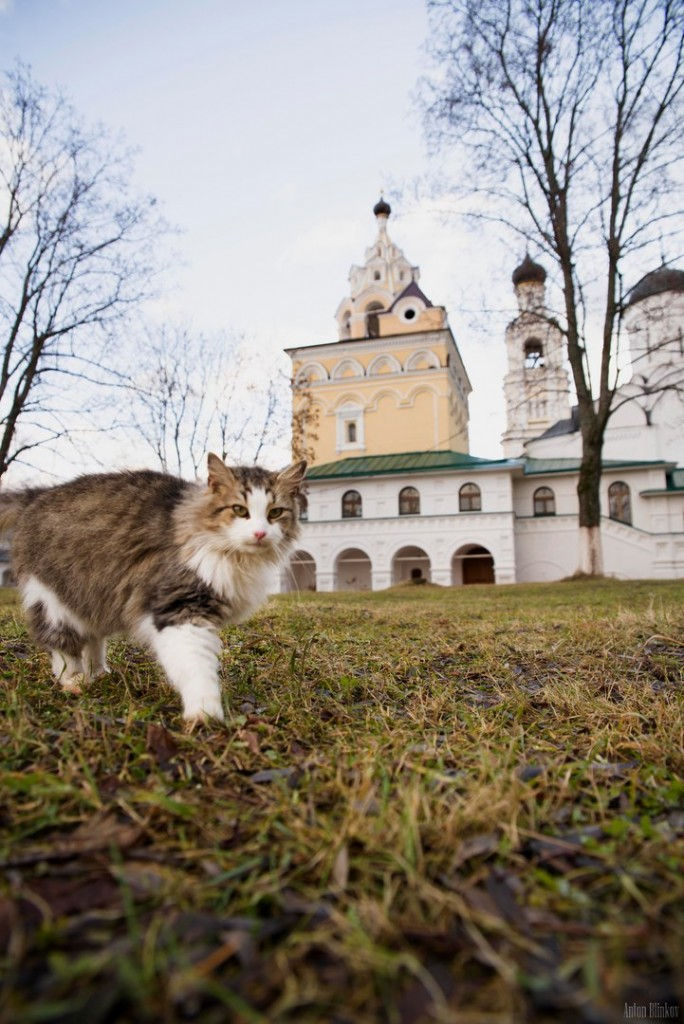 Монастырская кошка. г. Киржач 03