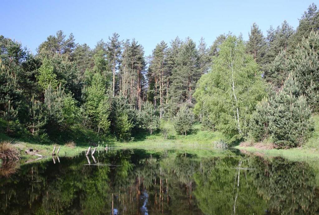 Окрестности села Великово и деревни Медынцево 08