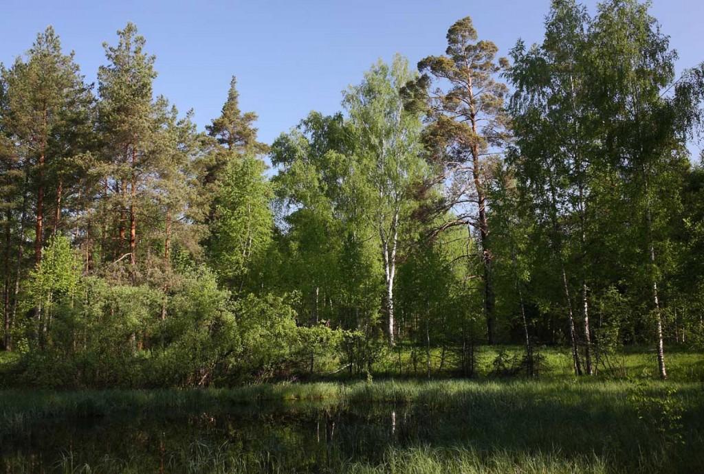 Окрестности села Великово и деревни Медынцево 09