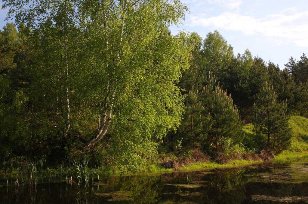 Окрестности села Великово и деревни Медынцево 10