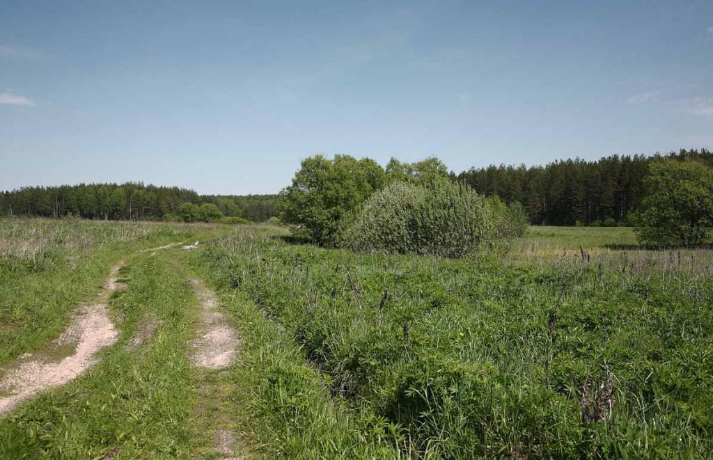 Окрестности села Великово и деревни Медынцево 11