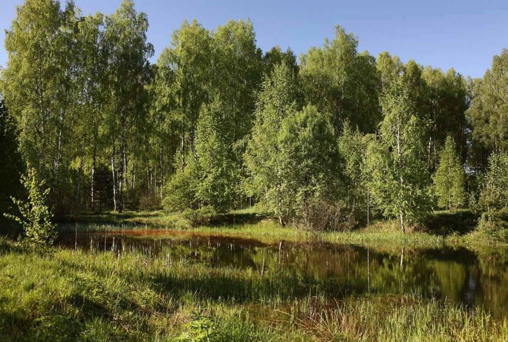 Окрестности села Великово и деревни Медынцево 12