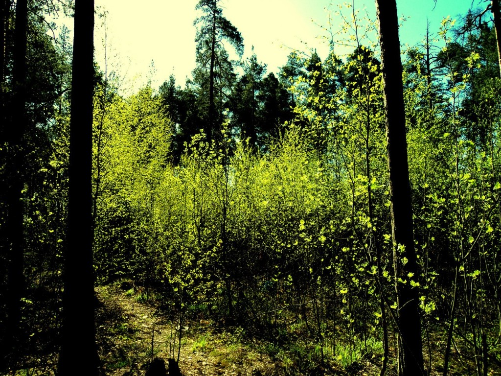 Парк Сказка, г. Гусь-Хрустальный 07.05.2015. Автор - Aigul Olvya 09